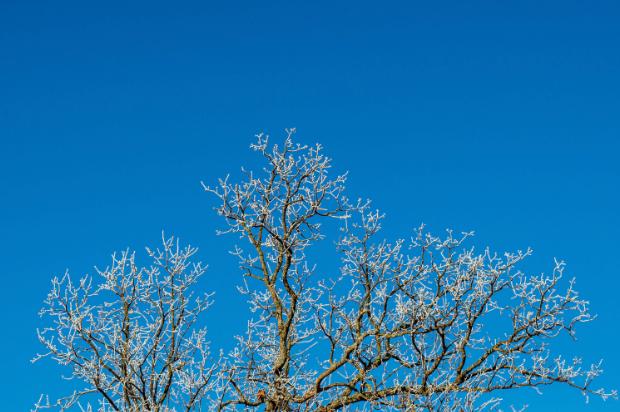 A tree in the Arkansas winter